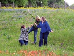 Jessica Plaia (left), Keeley Townley-Smith (middle), and Sara-jeanne Vogler (right) play in the wildflowers on their way back from the Joint Spring 2013 Meeting of the Texas sections of the APS, AAPT, and SPS in Stephenville, TX. Photos courtesy of Sara-jeanne Vogler.