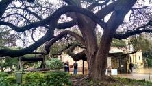 Although photography isn't allowed in the chapel, the courtyard of The Alamo was quite charming.