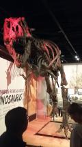 The great tyrannosaurus rex...